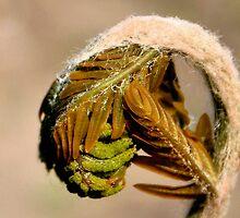 The Birth Of A Fern by Jo Nijenhuis