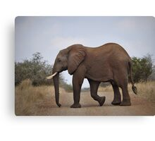 Look left, look Right........ Canvas Print