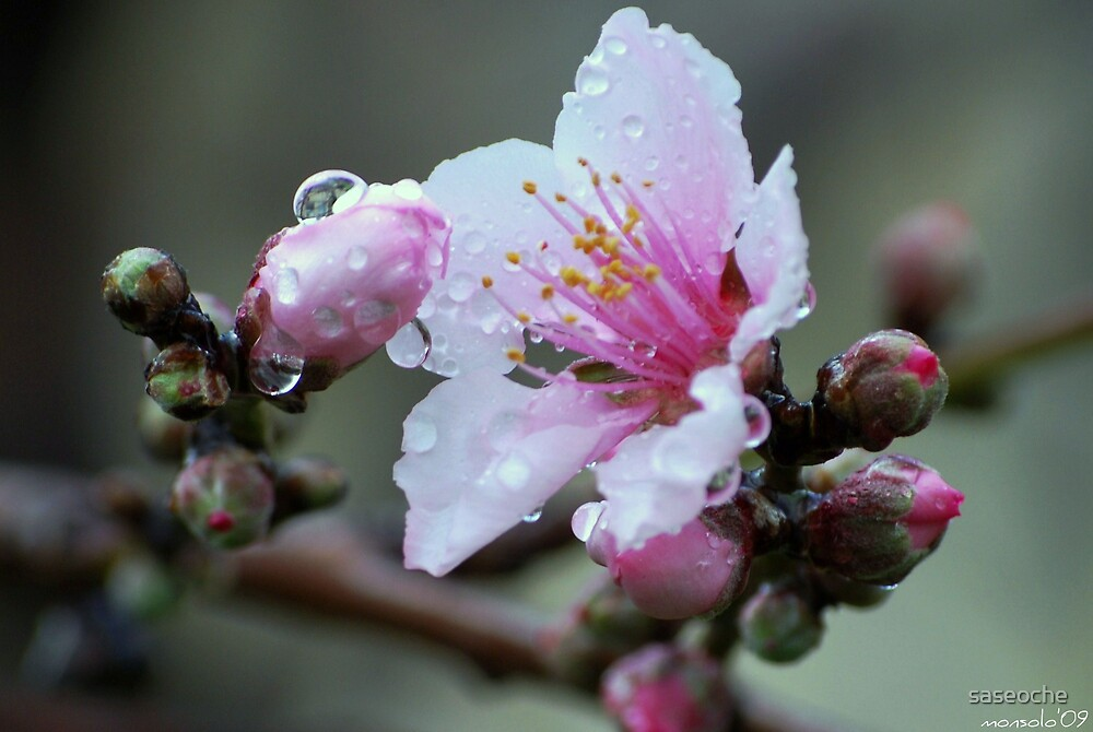 After Rain 3 by saseoche