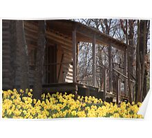 Daffodils in front of a cabin Poster