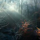 First Rays on a Frosty Morning by BettinaSchwarz