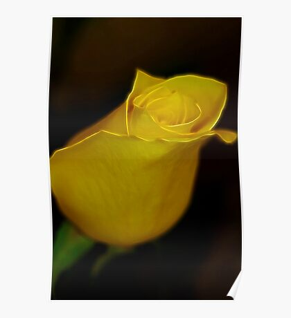 Single Yellow Rose Poster