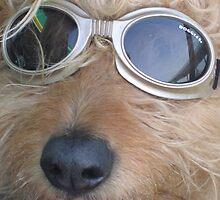 Doggles by Jennifer Ferry