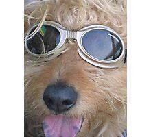 Doggles Photographic Print