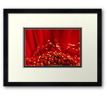 Cardinal Sin Framed Print