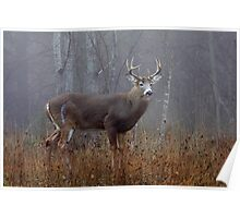 Buck - White-tailed Deer Poster