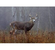 Buck - White-tailed Deer Photographic Print