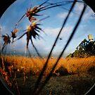 Grass by friartucker