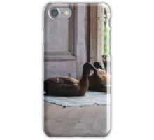 Ducks on the doorstep iPhone Case/Skin