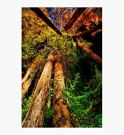 """Looking Up To The Fallen"" Photographic Print"