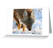 Coyote in snow Greeting Card