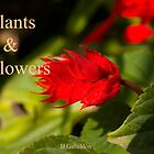 Plants &amp; Flowers by juan jose Gabaldon