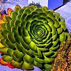 Cactus Flower by Steve Walser