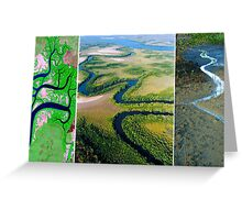 Exploring Scale - Mangroves Greeting Card