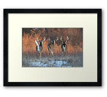 Three White-tails Walking Into the Sunset Framed Print