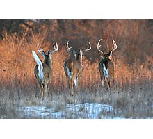 Three White-tails Walking Into the Sunset Photographic Print