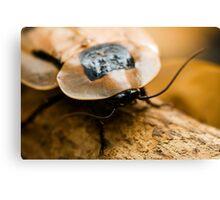 Brazilian Cockroach Canvas Print