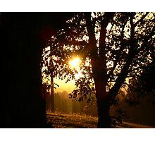 Mystic Glade Photographic Print