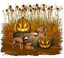 October Puppy .. a halloween tale Photographic Print
