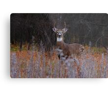A regal stance - White-tailed Deer Metal Print