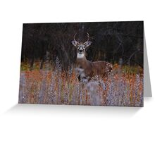 A regal stance - White-tailed Deer Greeting Card
