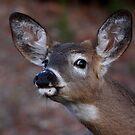Kiss me! - White-tailed Deer by Jim Cumming