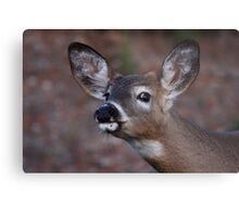 Kiss me! - White-tailed Deer Metal Print