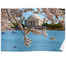 Cherry Blossoms at the Jefferson Poster