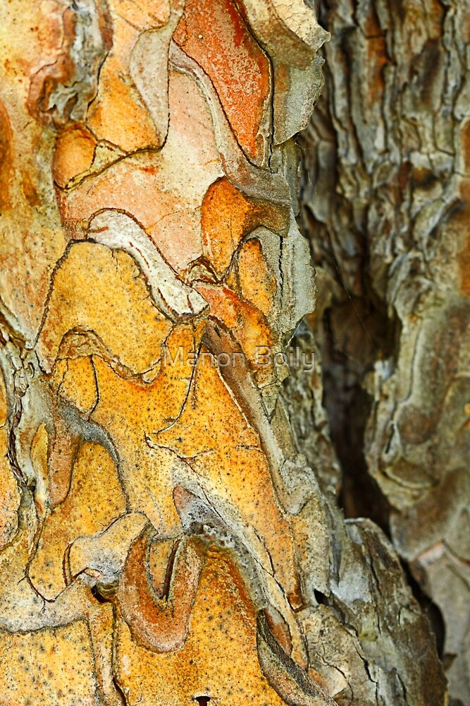 colorful tree trunk by Manon Boily