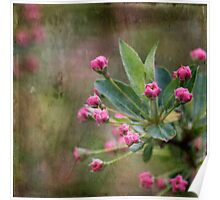 Crabapple Flower Buds Poster
