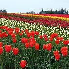 Forever Tulips by Tori Snow