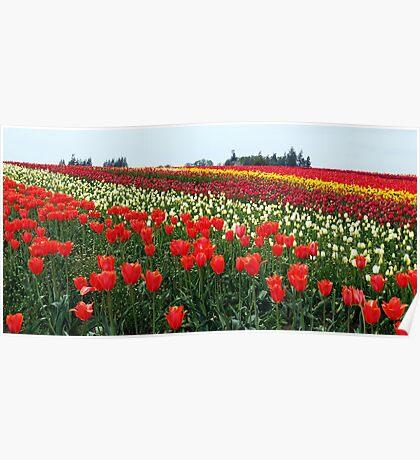 Forever Tulips Poster