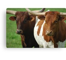 The Bovine Brothers Canvas Print