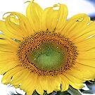 THE SUNSHINE FLOWER by Magriet Meintjes