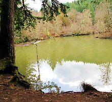Siuslaw Falls Swimming Hole by Chuck Gardner