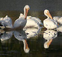 Preening Pelicans by fsmitchellphoto