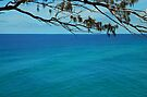 Coral Sea by Renee Hubbard Fine Art Photography