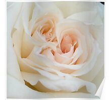 Close Up View Of A Romantic White Wedding Rose Poster
