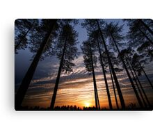 Standing with giants Canvas Print