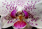 Orchid 1 by David Clarke