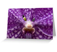 Orchid 6 Greeting Card