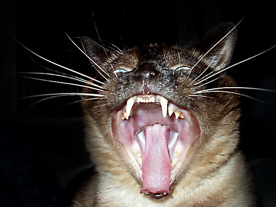 Attack of the Psycho Siamese by Megan Noble