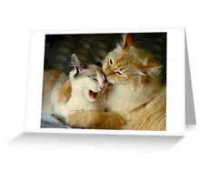 Grooming Time...Ouch!! Greeting Card