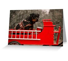 Rottweiler carting 2009 Greeting Card