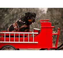 Rottweiler carting 2009 Photographic Print