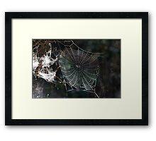 Spider's Web 2 Framed Print