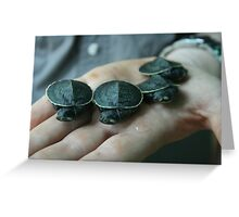 Baby Short Necked Turtles Greeting Card