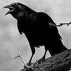 Calling All Crows by Samantha Dean