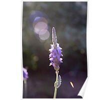 Circles of Lavender Light Poster
