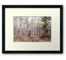 Aspens In the Pink Framed Print
